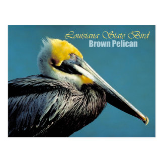 Louisiana State Bird - Brown Pelican Postcard