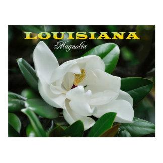Louisiana State Flower: Magnolia Postcard