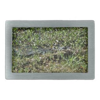 Louisiana Swamp Alligator in Jean Lafitte Belt Buckle