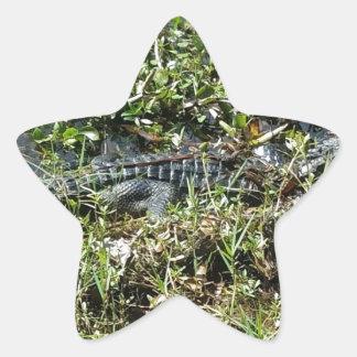 Louisiana Swamp Alligator in Jean Lafitte Close Up Star Sticker