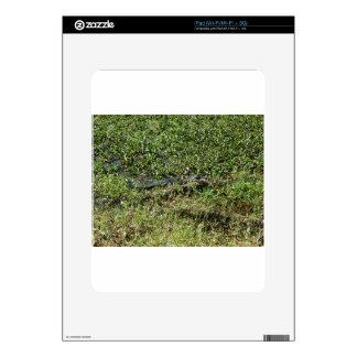Louisiana Swamp Alligator in Jean Lafitte Decal For The iPad