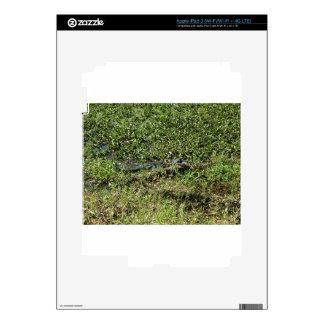 Louisiana Swamp Alligator in Jean Lafitte Decals For iPad 3