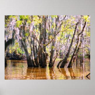 Louisiana Swamp Print