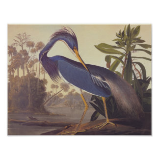 Louisiana Tricolored Heron Audubon Vintage Art Poster