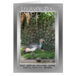 LOUISVILLE ZOO ANIMAL LINEUP CRANE, PEACOCK GREETING CARD