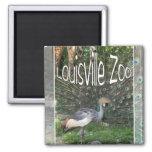 LOUISVILLE ZOO ANIMAL LINEUP CRANE, PEACOCK FRIDGE MAGNETS