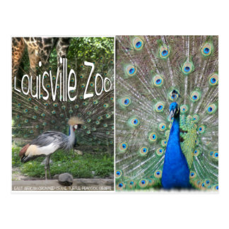LOUISVILLE ZOO ANIMAL LINEUP CRANE PEACOCK POSTCARDS