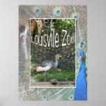 LOUISVILLE ZOO ANIMAL LINEUP PEACOCK CRANE POSTERS