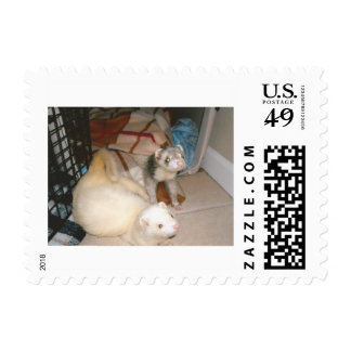 Loung Ferrets Postage Stamp