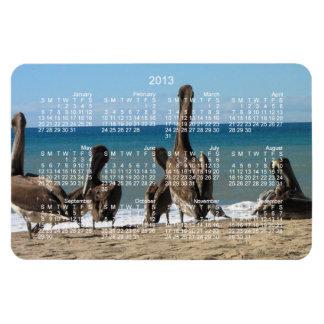 Lounging Beach Pelicans; 2013 Calendar Magnet