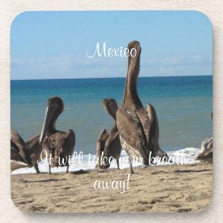 Lounging Beach Pelicans; Mexico Souvenir Drink Coaster