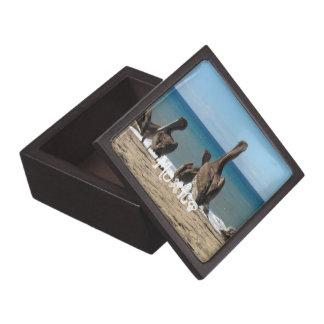 Lounging Beach Pelicans; Mexico Souvenir Gift Box