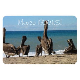 Lounging Beach Pelicans; Mexico Souvenir Magnet
