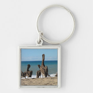 Lounging Beach Pelicans; No Text Keychain