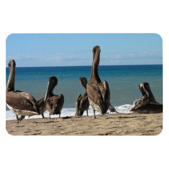 Lounging Beach Pelicans; No Text Magnet