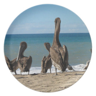 Lounging Beach Pelicans; No Text Plate