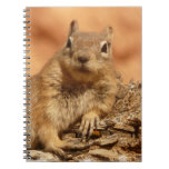 Lounging Chipmunk Notebook