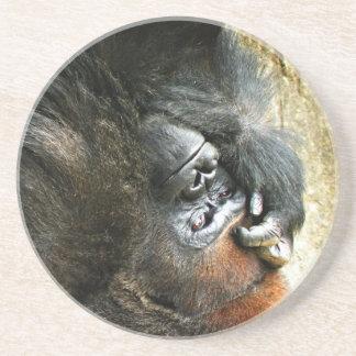 Lounging Gorilla Coaster
