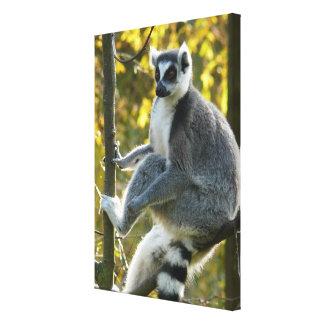 Lounging Lemur Gallery Wrap Canvas