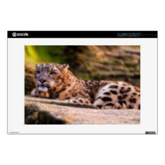 """Lounging Leopard Decals For 13"""" Laptops"""