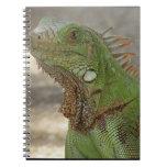Lounging Lizard Notebook