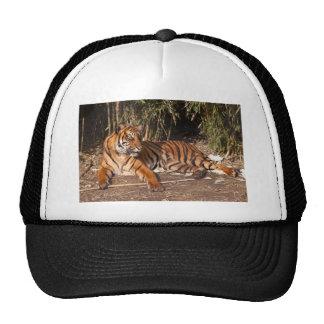 Lounging Tiger Hat