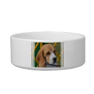 Lovable Beagle Bowl