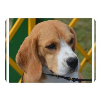 Lovable Beagle Card