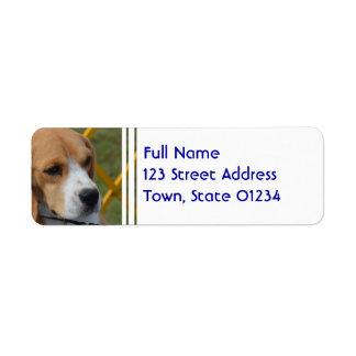 Lovable Beagle Label