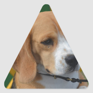 Lovable Beagle Triangle Sticker
