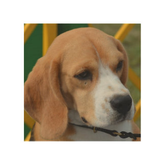 Lovable Beagle Wood Print