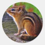 Lovable Chipmunk Sticker