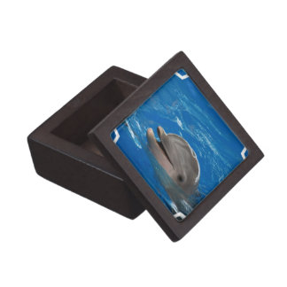 Lovable Dolphin Gift Box