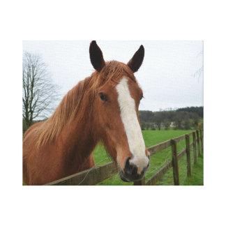 Lovable Quarter Horse Canvas Print