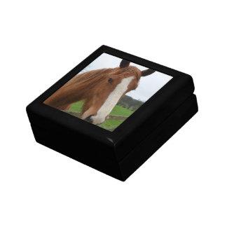 Lovable Quarter Horse Gift Boxes