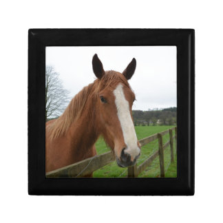 Lovable Quarter Horse Jewelry Boxes