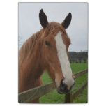 Lovable Quarter Horse Post-it Notes