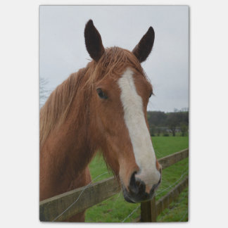 Lovable Quarter Horse Post-it® Notes