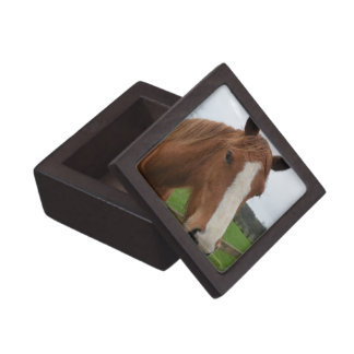 Lovable Quarter Horse Premium Gift Boxes