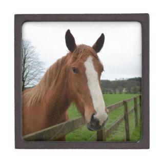 Lovable Quarter Horse Premium Keepsake Boxes