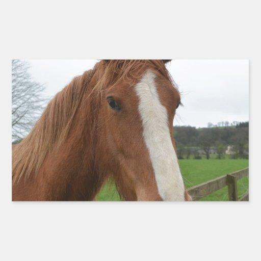 Lovable Quarter Horse Sticker