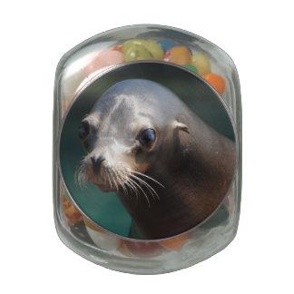 Lovable Sea Lion Glass Candy Jars