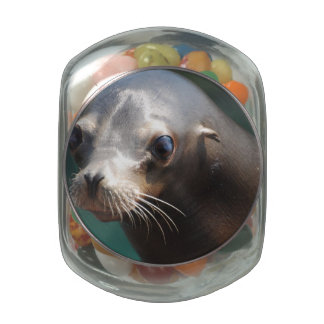 Lovable Sea Lion Jelly Belly Candy Jars