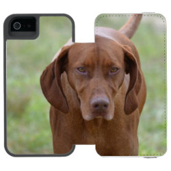 Incipio Watson™ iPhone 5/5s Wallet Case with Vizsla Phone Cases design