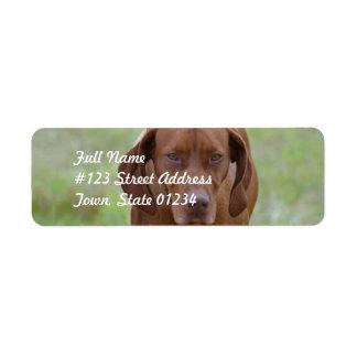 Lovable Vizsla Label