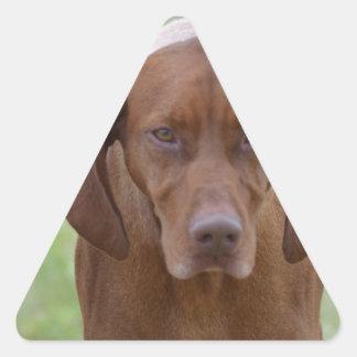 Lovable Vizsla Triangle Sticker