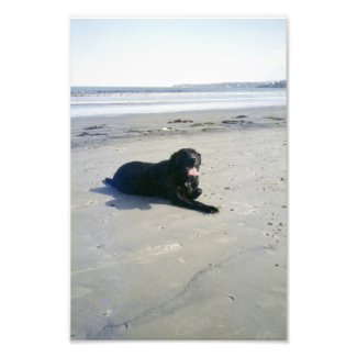 Love a Lab Photo Print from Zazzle