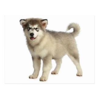 Love Alaskan Malamute Puppy Dog Postcard