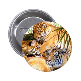 Love Always Tigers_ Pinback Buttons