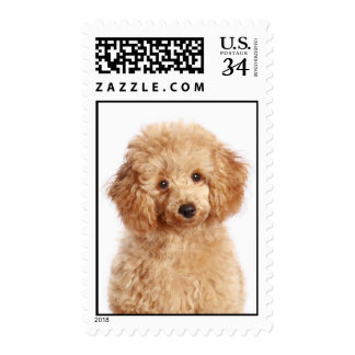 Love Apricot Poodle Puppy Dog Postage Stamps